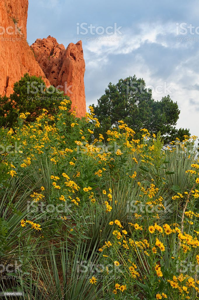 Summertime Wildflowers At Garden Of The Gods Stock Photo & More ...