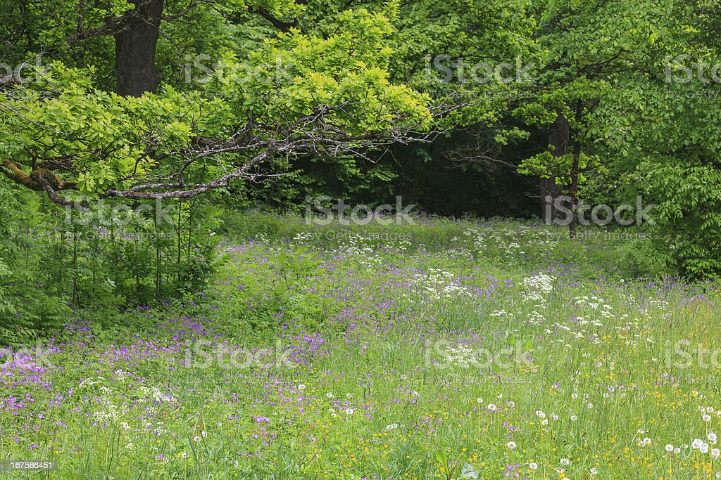 Summery floral meadow royalty-free stock photo