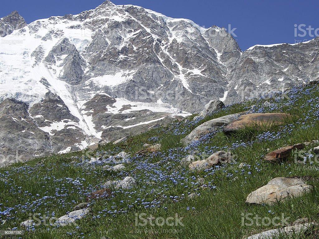 summit flower royalty-free stock photo