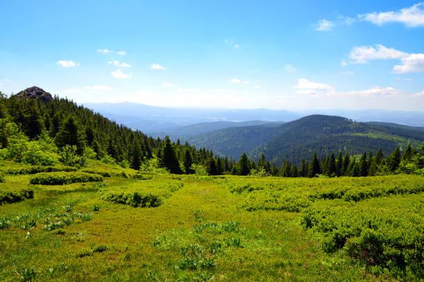 toppen av berget grosser arber, tyskland. - bayerischer wald bildbanksfoton och bilder
