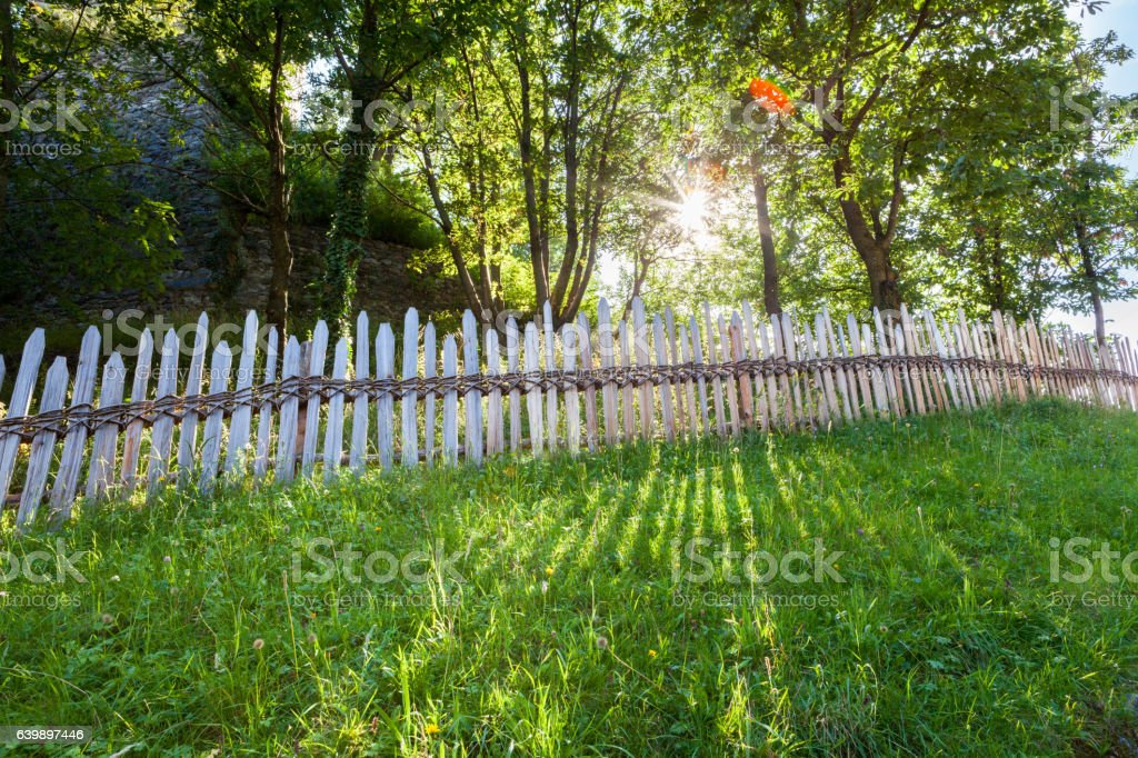 Raggi di Sole e Erba stock photo