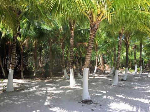 Sun and shadow on the Playa Palancar Cozumel Beach