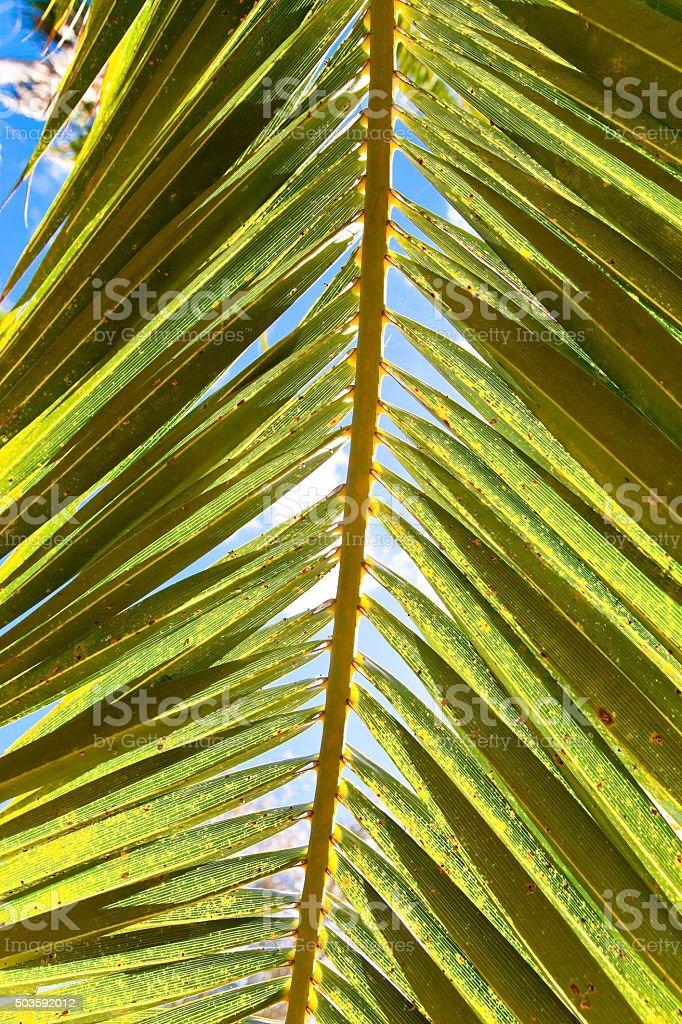 Sun and sky through a palm leaf stock photo