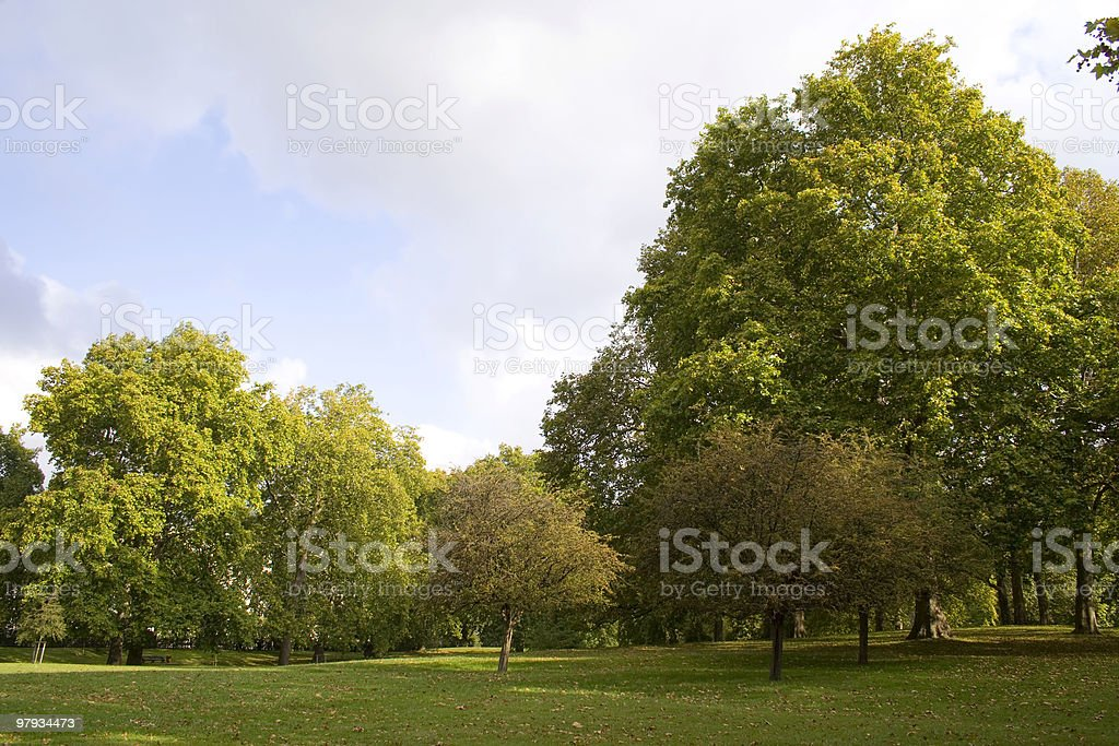 Sun at the park royalty-free stock photo