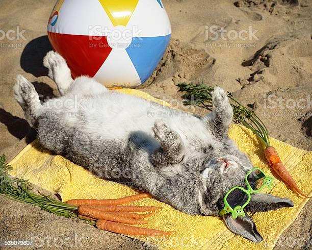 Sun bathing bunny rabbit vacations on the beach picture id535079607?b=1&k=6&m=535079607&s=612x612&h=bt6tqwmetfxahhvsiti aqkm73v 5smetzolepagsx4=