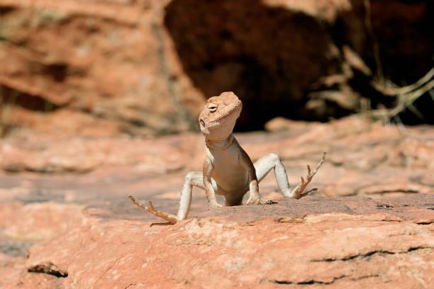 Sun Bathing Lizard stock photo