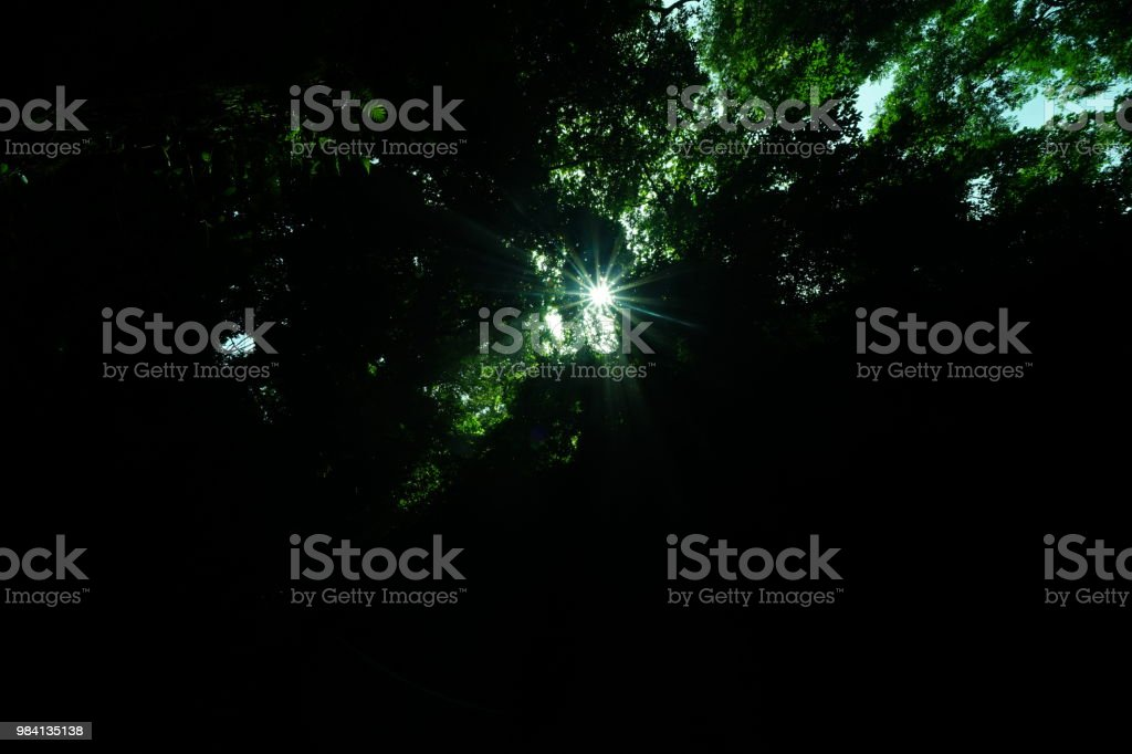 Sun beam at woods stock photo