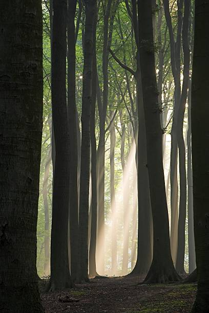 Sun beam in dark misty forest stock photo