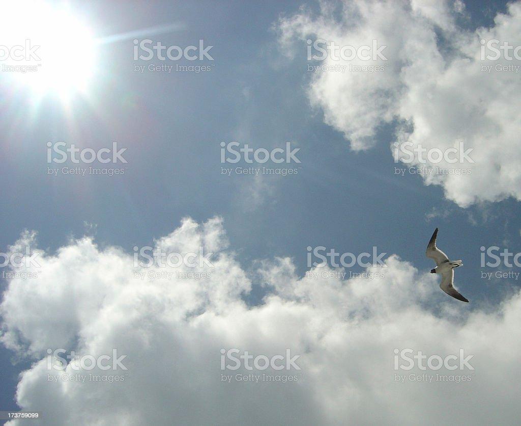 Sun Beaming Down through Clouds Whiel Bird Flies Over Head royalty-free stock photo