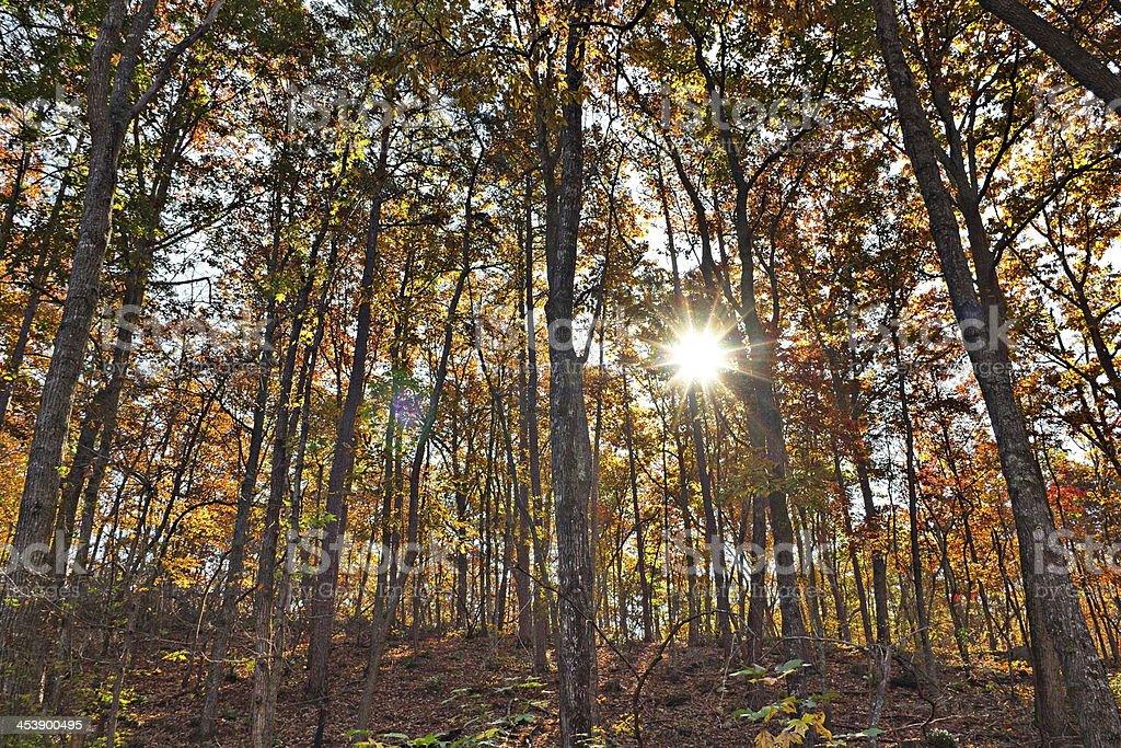 Sun beams dance in autumn trees stock photo
