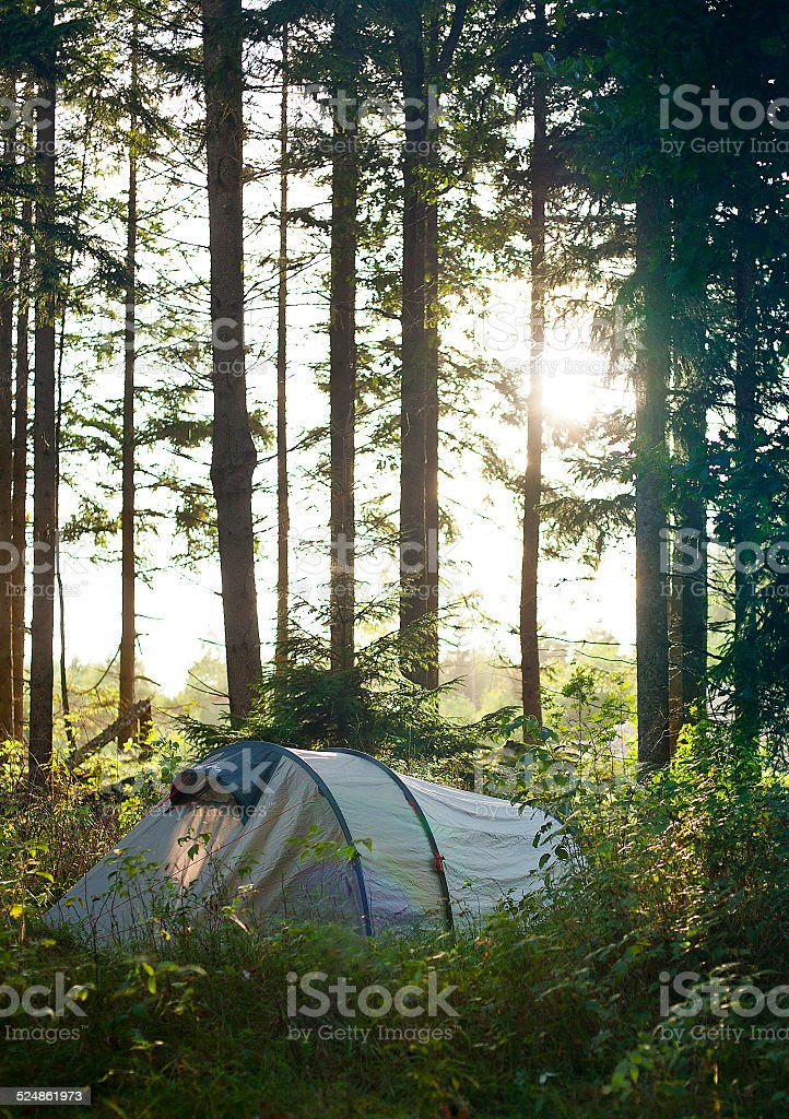 Sun beams hitting a tent through the trees stock photo