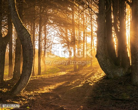 istock Sun beams in bright and foggy Autumn Forest 974175570
