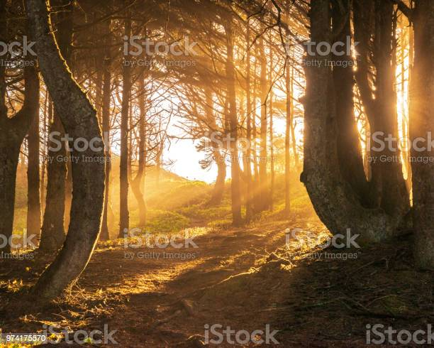 Photo of Sun beams in bright and foggy Autumn Forest