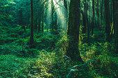 森の中の太陽ビーム