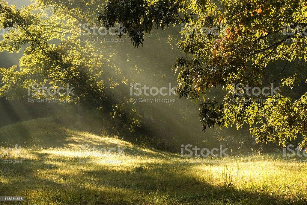 Sun beams royalty-free stock photo