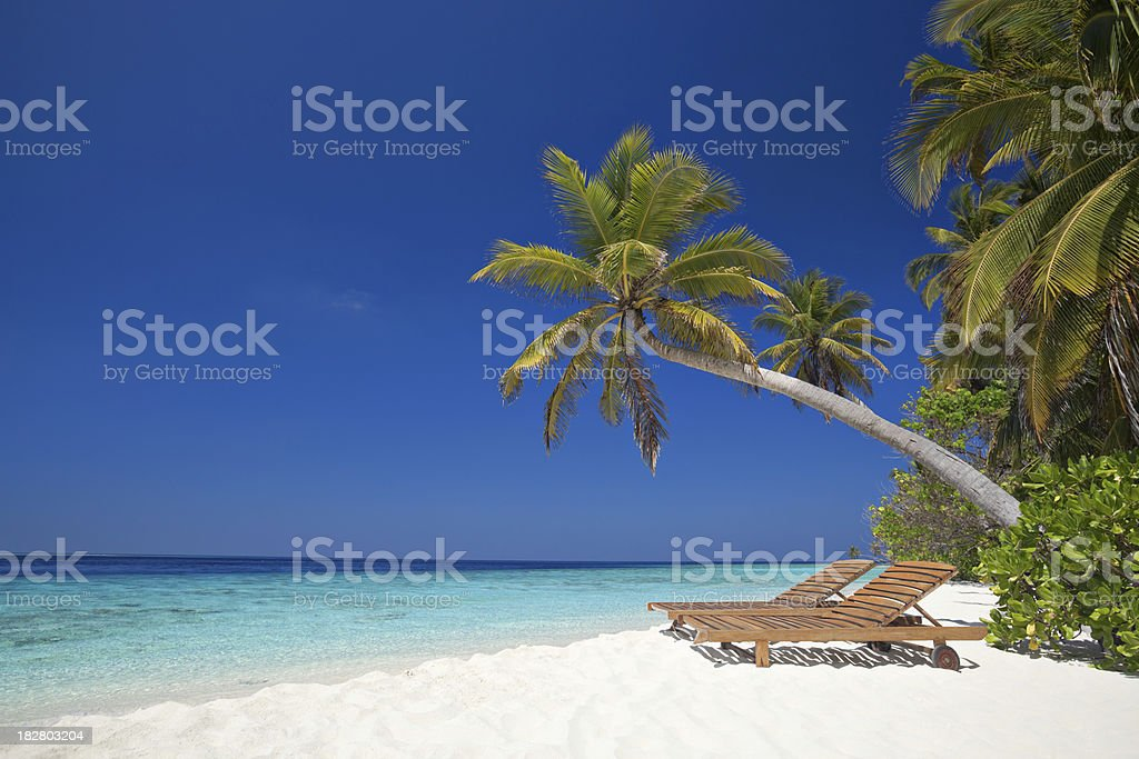 sun beds under palmtree at beachfront royalty-free stock photo