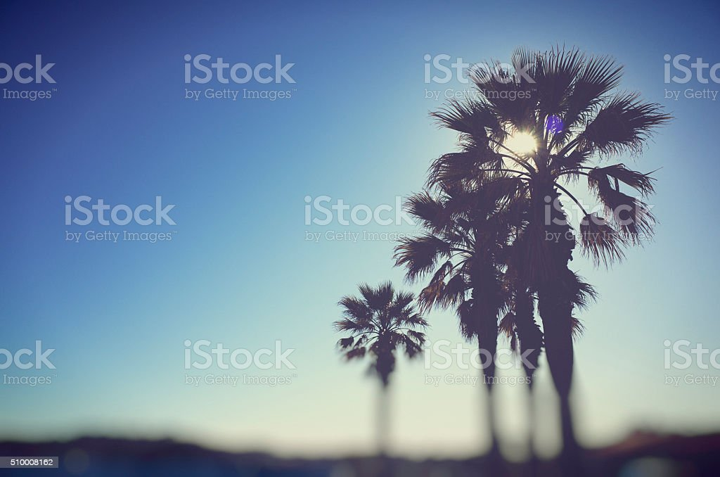 Sun Behind Palm Trees stock photo