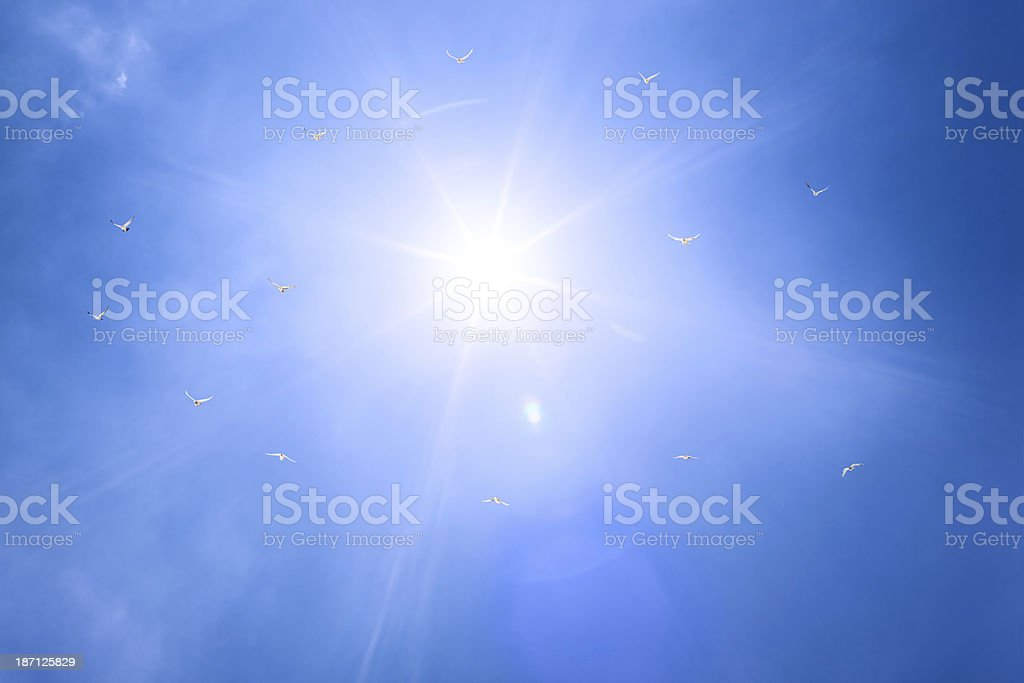 Sun, blue sky, and white doves royalty-free stock photo