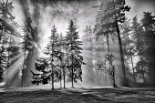 Misty afternoon in winter, black and white.