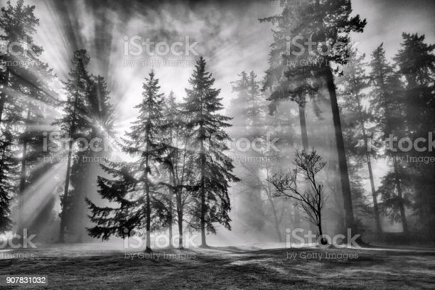 Photo of Sun bursts in the rain forest, Vancouver, Canada in black and white.