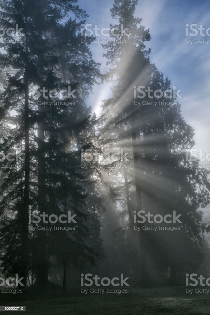 Sun bursts in the rain forest, Vancouver, Canada stock photo