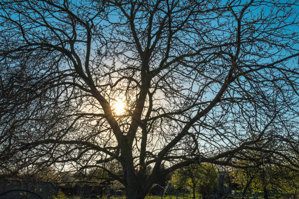 Sun comes out behind a tree (Dusk) stock photo