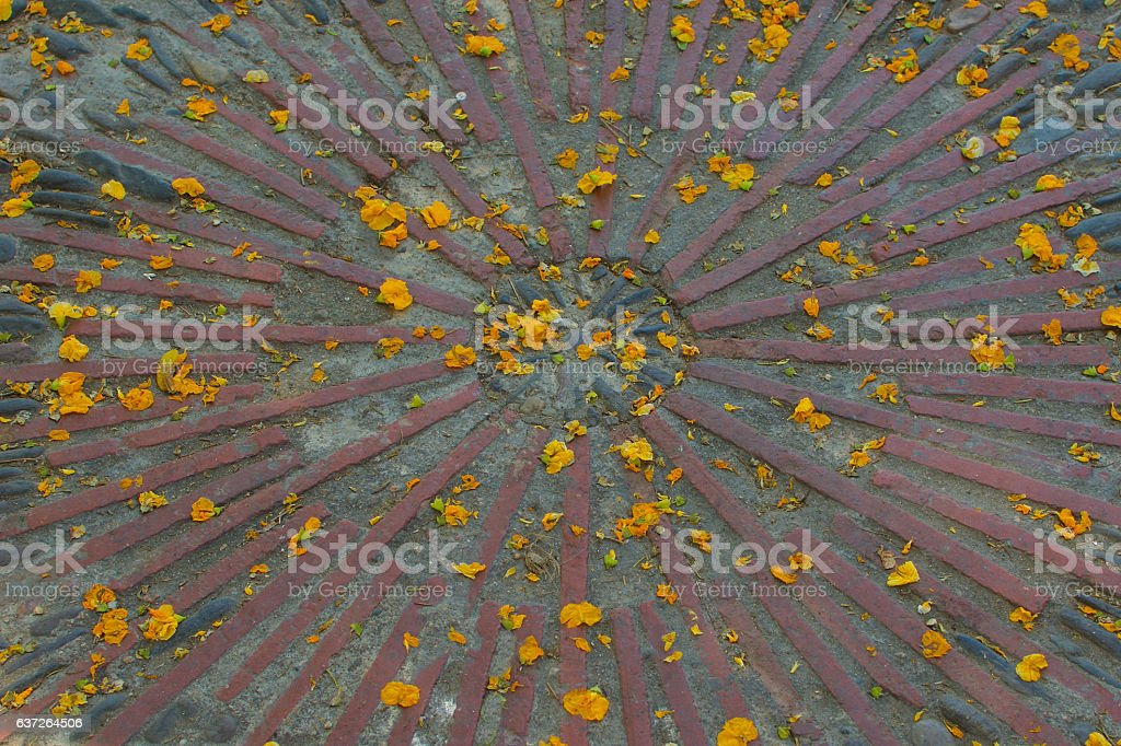 sun design with flower petals background texture – Foto