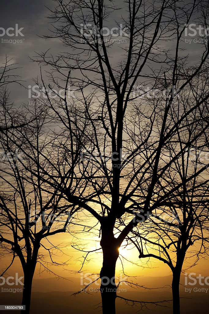 Sun Filtering Behind Trees Over Beautiful Panorama royalty-free stock photo