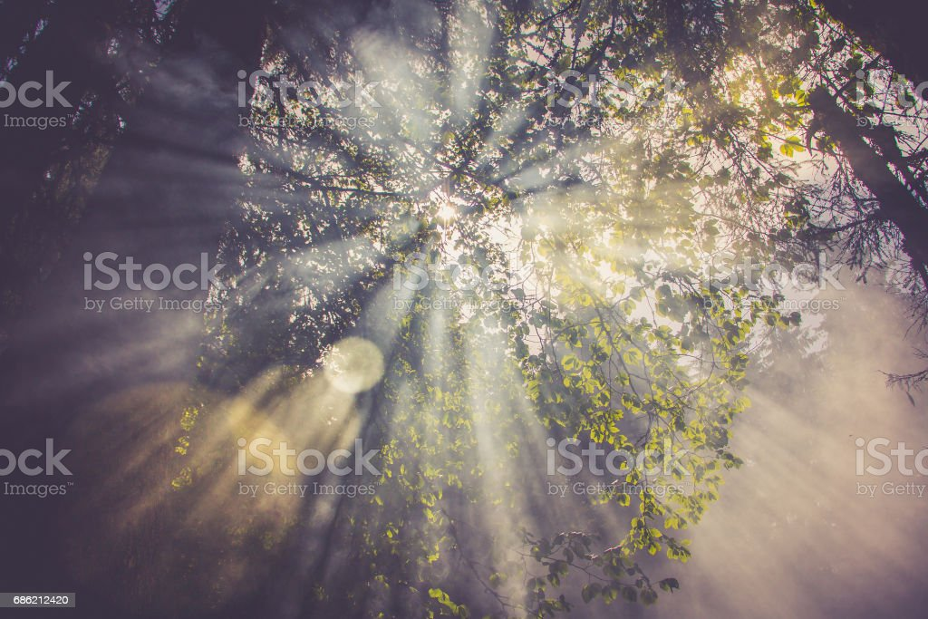 Sun flares go through the fog or smoke between green leaves in the forest stock photo