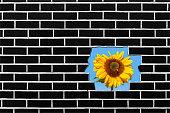 istock Sun Flower Breaking Through 1085232558