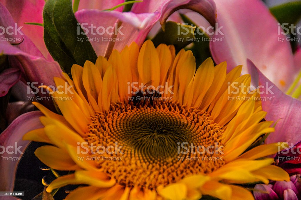 Sun flower in market with bee stock photo