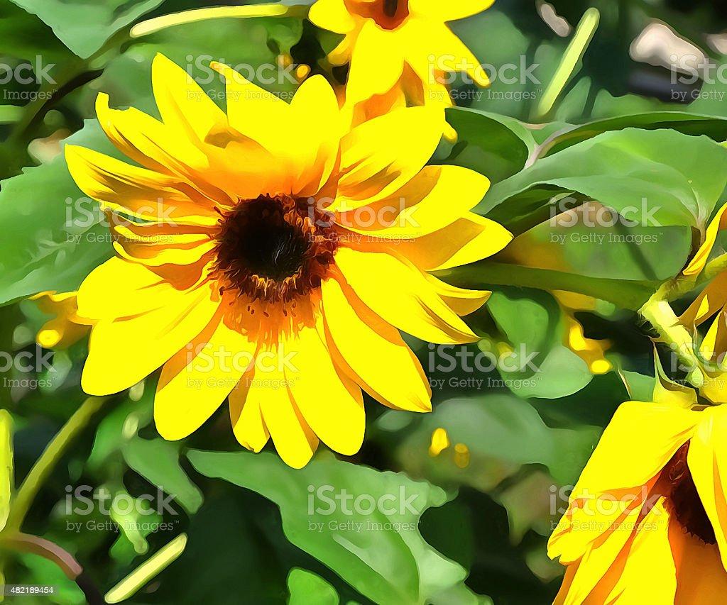 Sun flower #1 stock photo