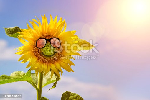 Sun flower wearing sunglasses at suuny summer day. Sunflower macro in summer spring on background blue sky with sunshine and a sunglass, close-up macro. Summer natural landscape