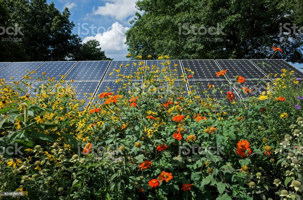 Sun flowers and solar panels stock photo