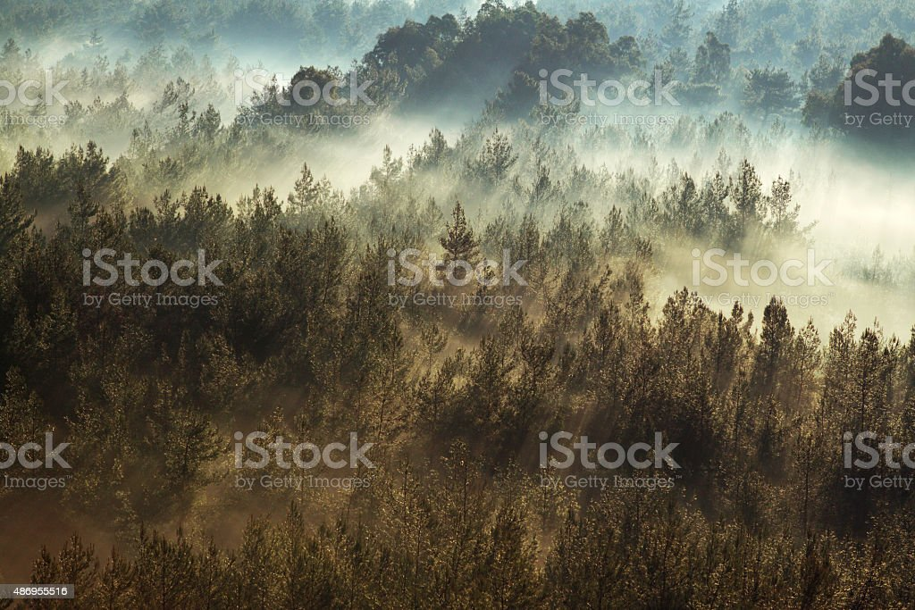 Sun, Fogs, a Forest and a Mountain stock photo