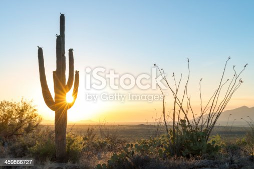 Sun and cactus, Tucson, Arizona, USA.