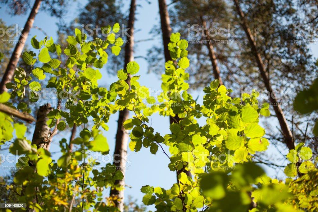 Sonne leuchtenden grünen Blättern – Foto