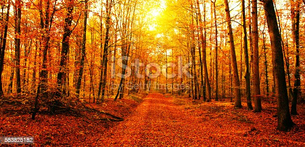 Sun in a colorful autumn forest