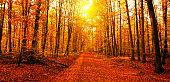 istock Sun in autumn forest 583825182