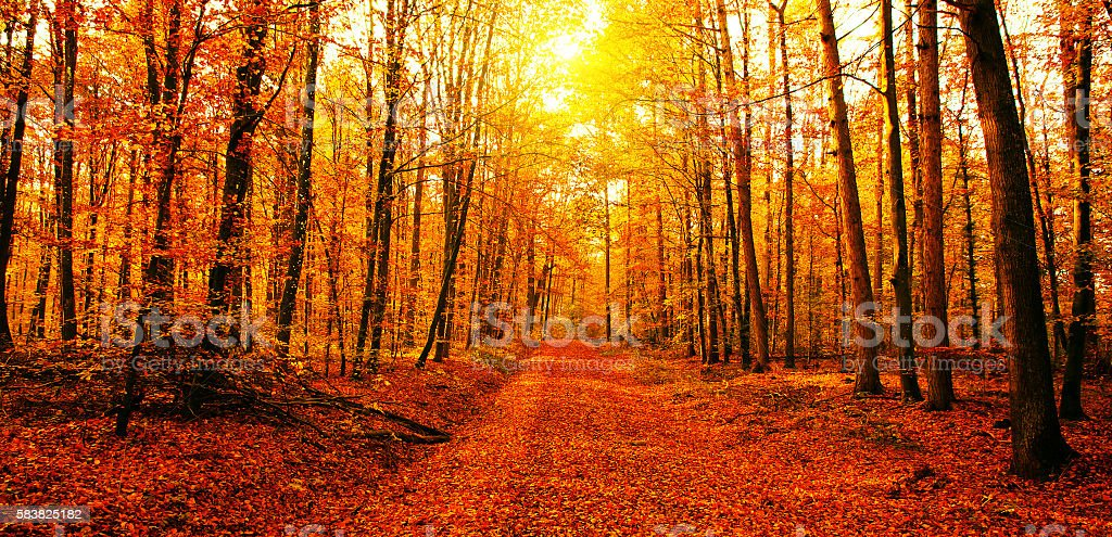 Sun in autumn forest​​​ foto