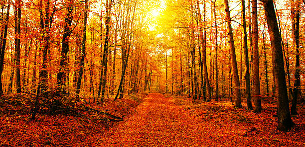 Sun in autumn forest stock photo