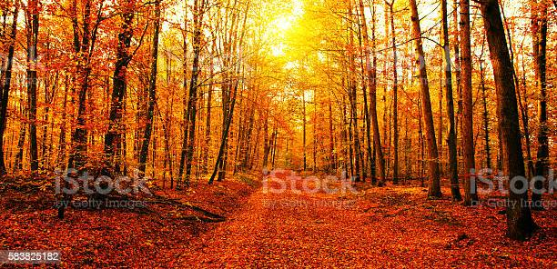 Photo of Sun in autumn forest