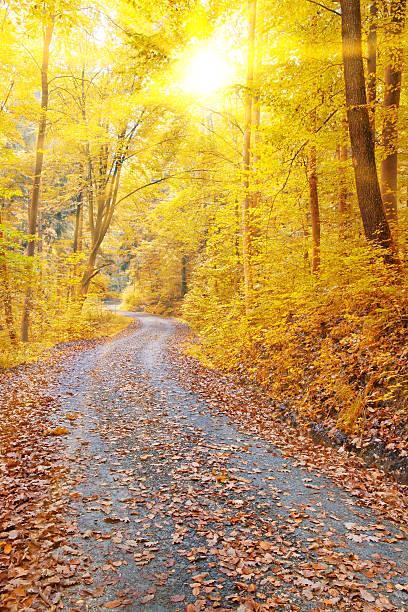 Sonne im Herbst Wald – Foto