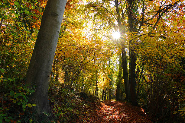 Sun in fall forest stock photo