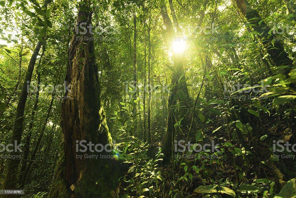 Sun in Pluvial Rainforest stock photo