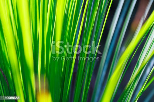 sunlight through the leaves of the grass tree