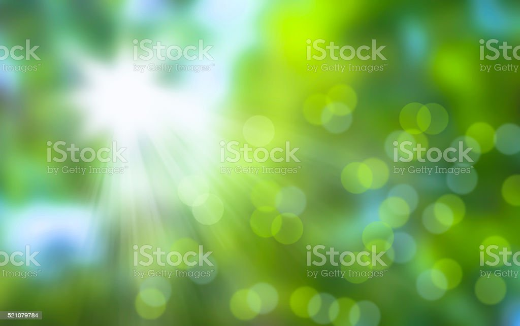 sun is shing in the forest stock photo