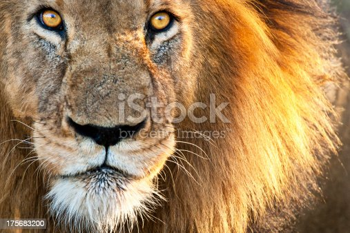 Focus on eyes with reflection of safari vehicle