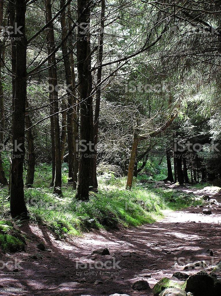 Sun Kissed Woodland royalty-free stock photo