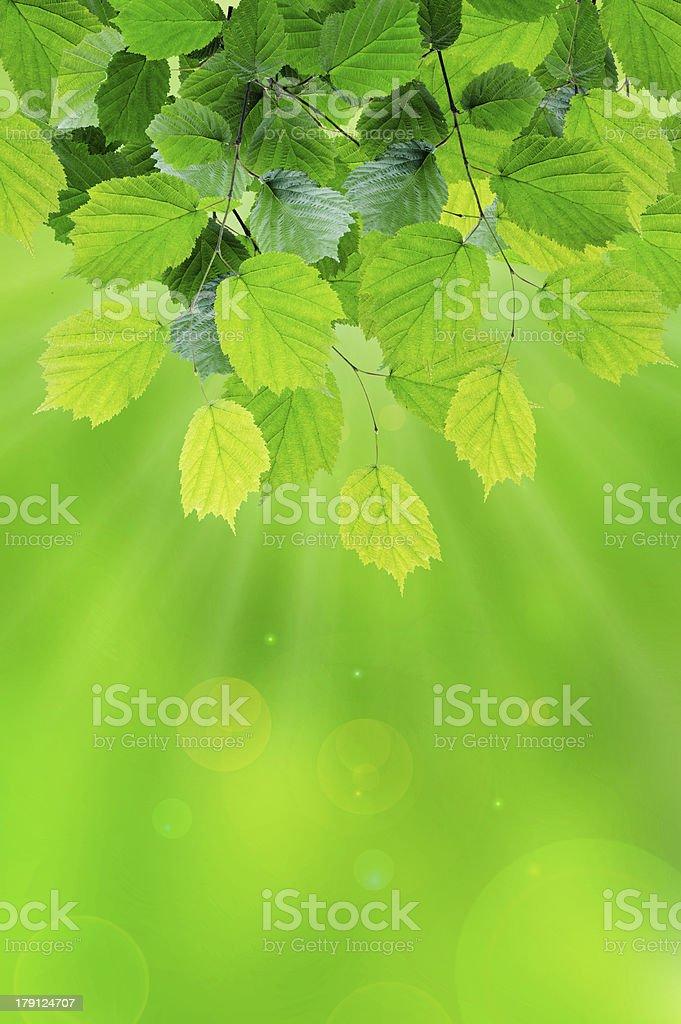 Sun leaves royalty-free stock photo